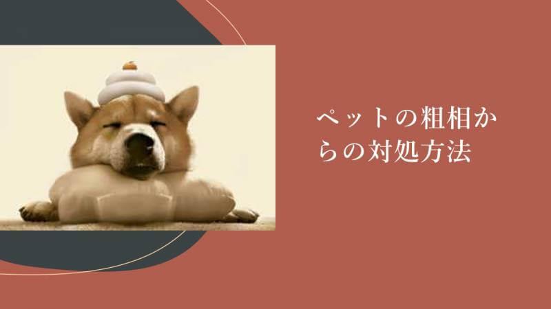 ペットの粗相からの対処方法